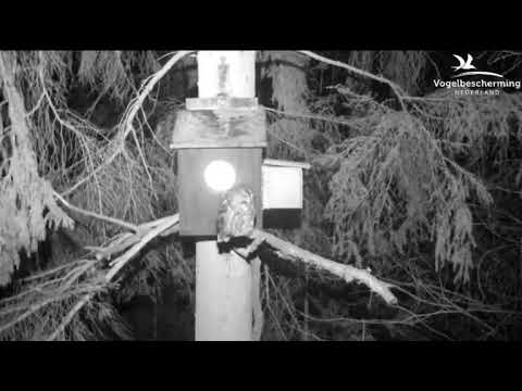 25.02.18 (Früher, ruhiger Waldkauz)