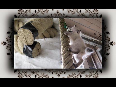 DIY 😻 Tauwerk Kletterseil aus Hanf für Kitten | hemp climbing rope for Kitty