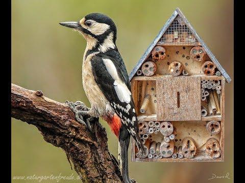 Spechtschaden und Vogelschutz am Insektenhotel