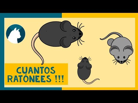 🐈Juego para gatos en video 🐾 - 🐭Juego de ratones🐭 - Games for cats