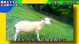 3分観光案内六甲山牧場兵庫県関西おすすめスポット