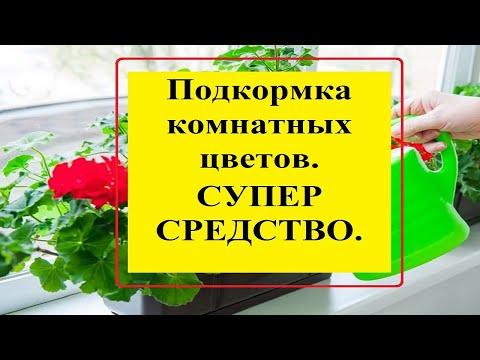 Подкормка комнатных цветов домашними средствами.