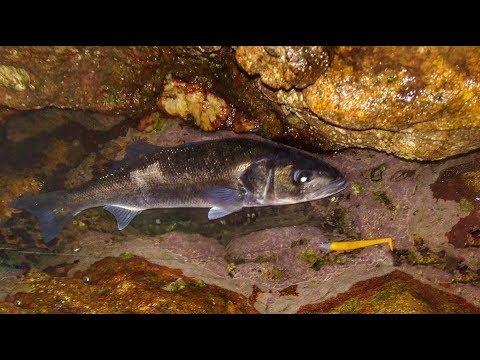Oncia pesca del distretto piacevole di Priozersk