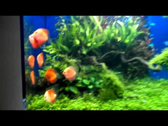 180 Gallon Planted Discus Tank
