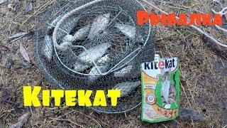 Ловля рыб на кошачий корм