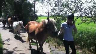 preview picture of video 'Kinderferien auf dem Reiterhof - der Ponyhof Bree an der Nordsee'