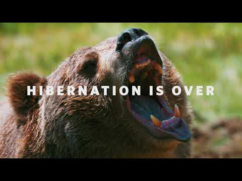 Hibernation is over and the Bruins are back