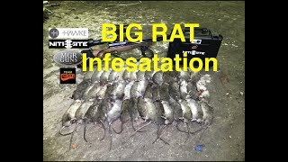 RAT CITY!!! Air Arms S510 takes them on. Team Foxer