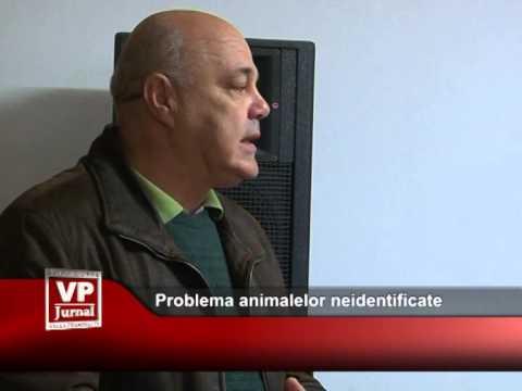 Animalele neidentificate constituie o problemă