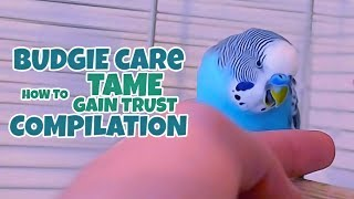 Budgie Care   How to Tame, Gain Trust Compilation