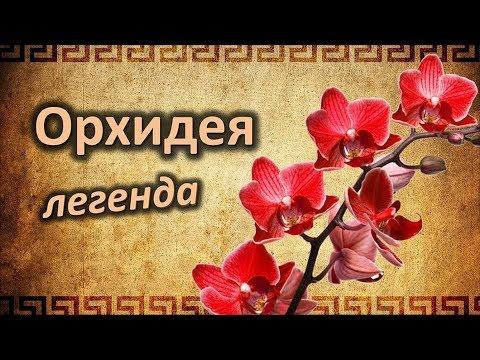 ОРХИДЕЯ. Интересные легенды о цветке!