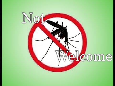 Bél paraziták kezelése emberben