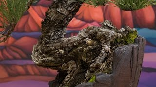 Ponderosa Pine Timelapse