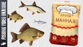 Рыбалка как приготовить манку для рыбалки