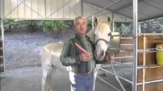 Horse Stretching | Equine Massage Training Video
