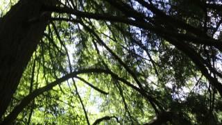 Tuscarora State Park 073