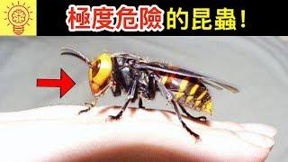 10個世界上【最危險昆蟲】!像被子彈擊中!