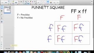 Punnett Square Tutorial