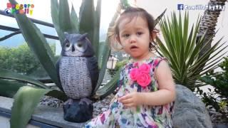 """Em 19 Tháng Tuổi """"dạ"""" Mẹ Và Tập Nói Từ """"cú Mèo""""- Annalisa LyLy"""
