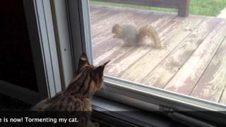 F1 Savannah Cat and Pet Squirrel