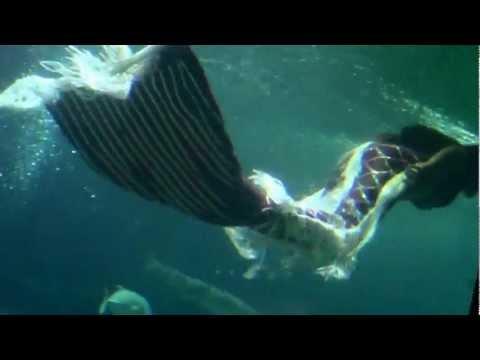 Nàng Tiên Cá xuất hiện tại Nha Trang, Việt Nam. Ai thích tiên cá không nào?