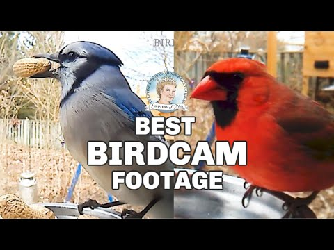 Candid Footage from My Backyard Bird Cam