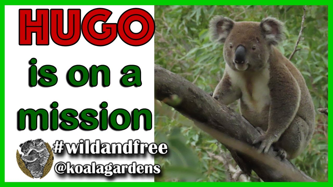 HUGO – on a mission