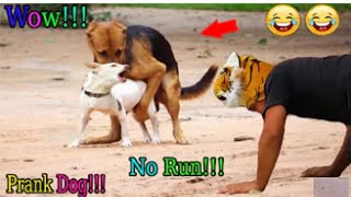 funny cats and dogs ● Wow! Fake Tiger Prank Dog So Funny Try To Stop Laugh Challenge Pranks 2021