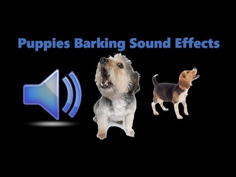 100% GUARANTEED TO MAKE YOUR Puppy HOWL Barking Sound Effect