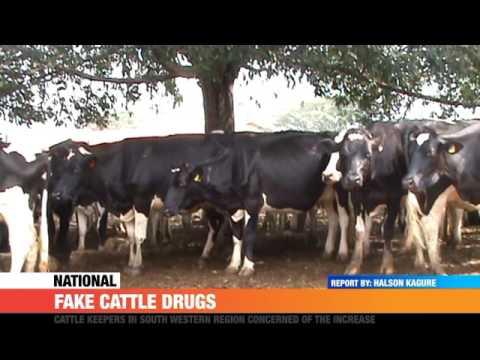 #PMLive: FAKE CATTLE DRUGS Cause Big Losses in Western Uganda