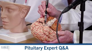 Where is the pituitary gland located? What does it do?
