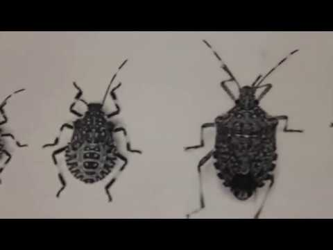 Invasive Insect Pests & Climate Change
