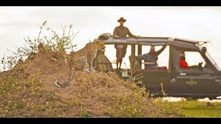 Luxury in the Wilderness - VIDEO