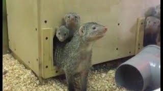 Животным зоопарка придумывают зимние развлечения