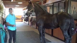Piaffe Training Video