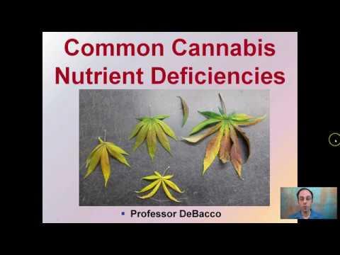 Nutrient - новый тренд смотреть онлайн на сайте Trendovi ru