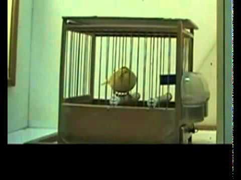 immagine di anteprima del video: MALINOIS WATERSLAGER 2010 RM BERNAL