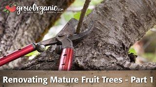 How to Rejuvenate Old Fruit Trees
