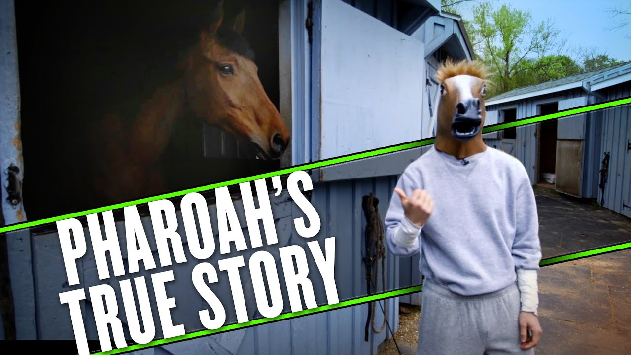 The story of Triple Crown legend American Pharoah that you don't know thumbnail