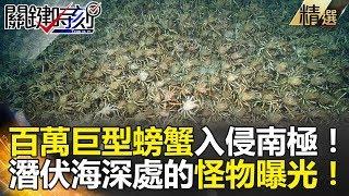 百萬巨型螃蟹入侵南極! 潛伏海底深處的怪物曝光! - 關鍵時刻精選 黃創夏 眭澔平 朱學恒 馬西屏