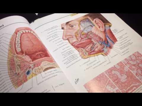 Методика физиотерапии простатита