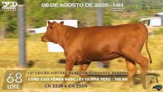 Coro 2325 b4 fiv