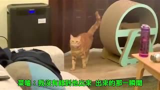 Life喳〞貓咪到底怎麼越獄的?!