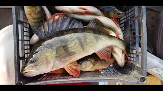 Диалоги о рыбалке в карелии летом 2020