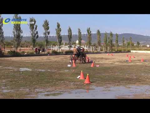 Campeonato navarro de enganches Olite 2017 3