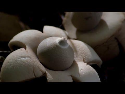 Les préparations des helminthes vikipediya