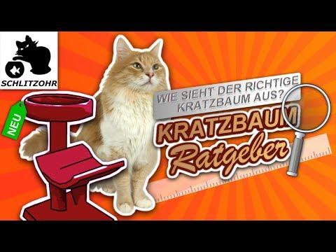 🔥Kratzbaum XXL, Kratzbaum günstig, Kratzbaum für große Katzen - worauf achten? Katzenbaum Ratgeber