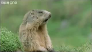 Прикольная озвучка животных видео