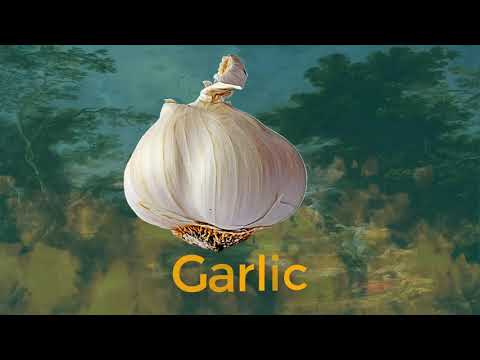 What is the interpretation about Garlic  ?