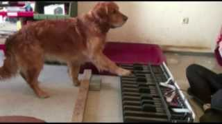 Just thought id share these talented dogs with you all just because